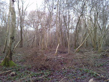 woodland-to-be-coppiced