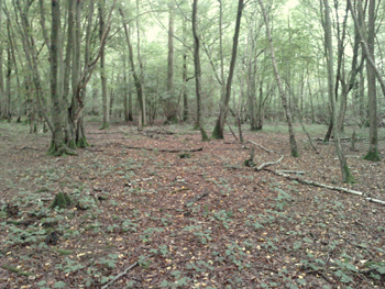 woodland-clearing-for-roundhhouse