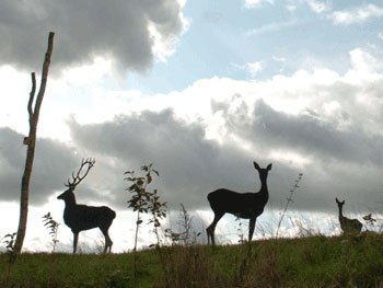 life size red deer sculpture