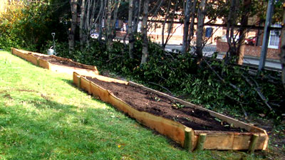 Larch wood raised beds