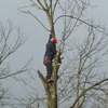 Tree Surgery services explained